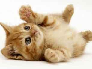 О жизни кошек